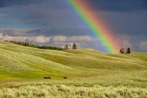 Factsheet: Rainbows in religion