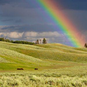 Factsheet: Rainbows in religion